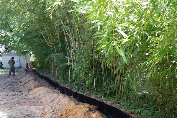 bamboo containment service